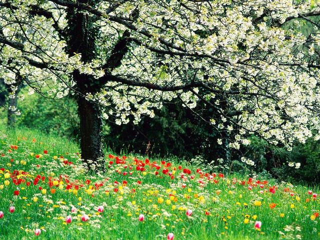 Bildschirmschoner zum Frühling